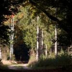 Licht in bos